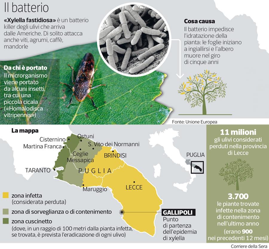 Mappa Xylella Puglia.Infographics Xf Actors