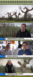 euronews TV documentary Xylella fastidiosa