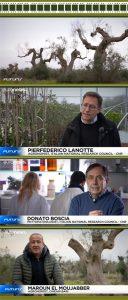 euronews TV documentary Xylella fastidiosa