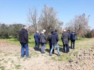 Delegates of the DG-AGRI visited Apulia Italy Xylella areas