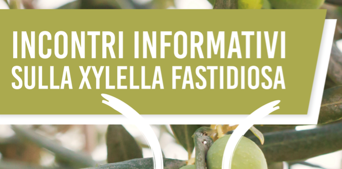 xylella 4 technical meetings