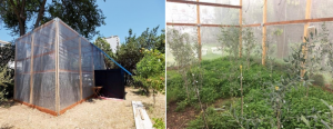 Outside and inside view of the mesocosm settled in Bari
