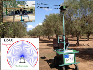 Xf-Rovim. A Field Robot to Detect Olive Trees Infected by Xylella Fastidiosa Using Proximal Sensing