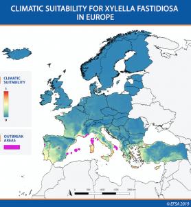 Climatic suitability for Xylella fastidiosa in Europe