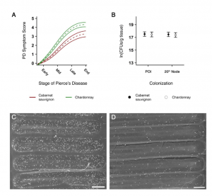 Characterization of Xylella fastidiosa Virulence Factors