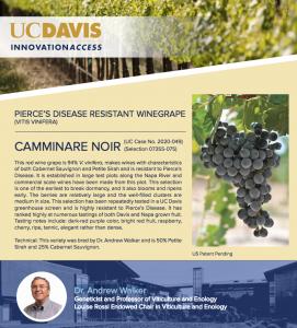 Pierce's Disease Resistant Grapevine Cultivars Released