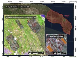 Monitoring the incidence of Xylella fastidiosa infection in olive orchards T using ground-based evaluations, airborne imaging spectroscopy and Sentinel-2 time series through 3-D radiative transfer modelling