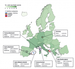 An overview on the worldwide vectors of Xylella fastidiosa