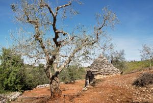 Xylella: 37 new plant species added to host list