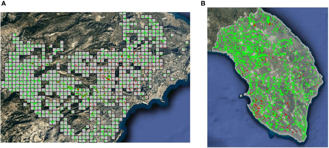 Study shows strong spatial clustering of Xylella fastidiosa in Alicante (Spain) and Apulia (Italy)