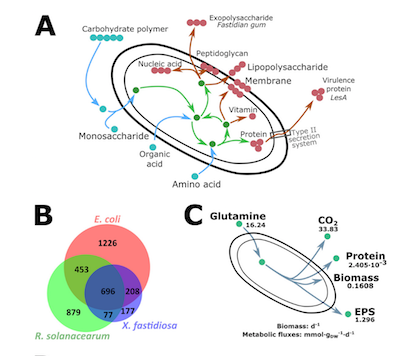 Genome-Scale Investigation of the Metabolic Determinants Generating Bacterial Fastidious Growth