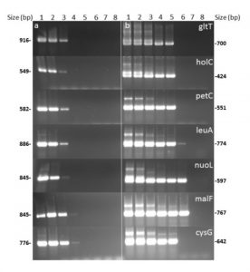 Development of A Nested-MultiLocus Sequence Typing Approach for A Highly Sensitive and Specific Identification of Xylella fastidiosa Subspecies Directly from Plant Samples