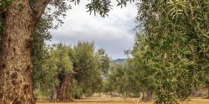 Online training course on monitoring and surveillance of olive pathogens