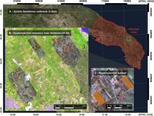 Monitoring the incidence of Xylella fastidiosa infection in olive orchards using ground-based evaluations, airborne imaging spectroscopy and Sentinel-2 time series through 3-D radiative transfer modelling