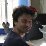 Profile picture of Massimo Giorgini
